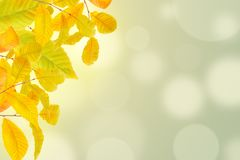 Jesieni tło z kolorowymi czerwieni i koloru żółtego liśćmi fotografia royalty free