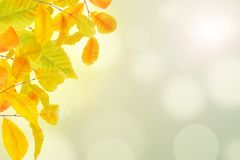Jesieni tło z kolorowymi czerwieni i koloru żółtego liśćmi zdjęcie royalty free
