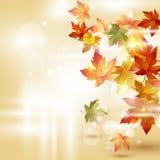 Jesieni tło z liśćmi Fotografia Royalty Free