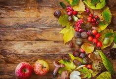 Jesieni tło z liśćmi, jagodami, jabłkiem i pieczarką, Obraz Royalty Free