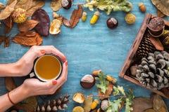 Jesieni tło z liśćmi, kasztanami, acorns, sosna rożkiem i kobietą, wręcza trzymać gorącą filiżankę herbata Odgórny widok, mieszka Obrazy Stock
