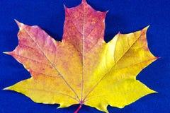 Jesieni tło z liśćmi na błękicie i fotografia royalty free