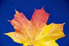 Jesieni tło z liśćmi na błękicie i zdjęcia stock