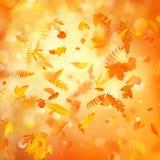 Jesieni tło z naturalnymi liśćmi i jaskrawym światłem słonecznym 10 eps royalty ilustracja