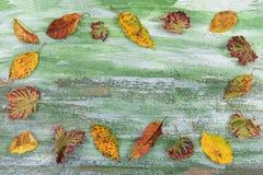 Jesieni tło z różnorodnymi kolorowymi liśćmi tworzy granicę na zielonym drewnianym tle z przestrzenią dla teksta Obrazy Royalty Free