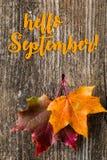 Jesieni tło z WRZEŚNI listami i jesień liśćmi CZEŚĆ zdjęcie stock