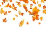Jesieni tło z złotym klonem, dębem i inny, opuszcza 10 eps royalty ilustracja