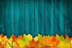 Jesieni tło Zdjęcie Stock