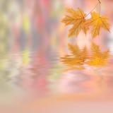 Jesieni tło 001 Obrazy Royalty Free