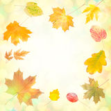 Jesieni tło 009 Obrazy Royalty Free