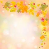 Jesieni tło 010 Obrazy Royalty Free