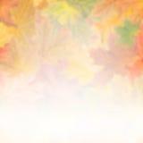 Jesieni tło 011 Obrazy Stock