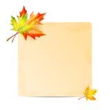 Jesieni tło Obrazy Royalty Free