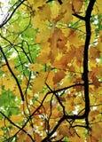 Jesieni tło Fotografia Royalty Free