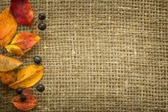Jesieni tło Zdjęcia Royalty Free