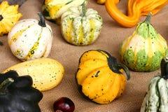 Jesieni tło z kolorowymi dekoracyjnymi baniami i kasztanem Zdjęcie Stock