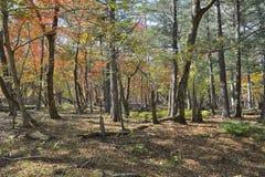 Jesieni tajga 25 Zdjęcia Royalty Free