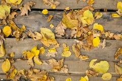 Jesieni tapety Obrazy Royalty Free