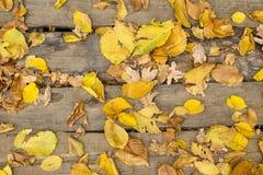 Jesieni tapety Obraz Royalty Free