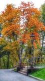 Jesieni threes Zdjęcia Royalty Free