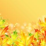 Jesieni tło Obrazy Stock