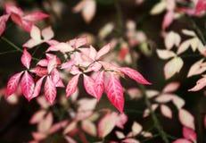 Jesieni tło z liśćmi Obraz Royalty Free