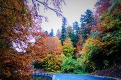 Jesieni trasa Obrazy Stock