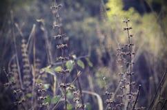 Jesieni trawa Obraz Stock