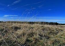 Jesieni trawa i łąka Zdjęcie Royalty Free