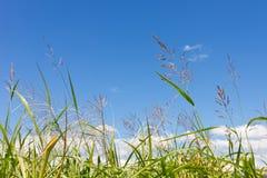 Jesieni trawa i niebo Zdjęcia Royalty Free