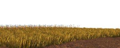 Jesieni trawa odizolowywająca na białej tła 3D ilustraci zdjęcie royalty free