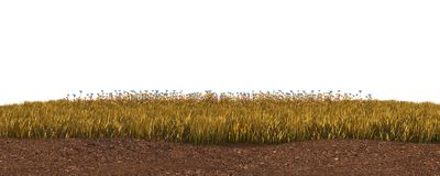 Jesieni trawa odizolowywająca na białej tła 3D ilustraci fotografia royalty free