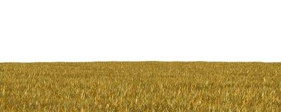 Jesieni trawa odizolowywająca na białej tła 3D ilustraci fotografia stock