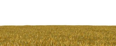 Jesieni trawa odizolowywająca na białej tła 3D ilustraci obrazy stock