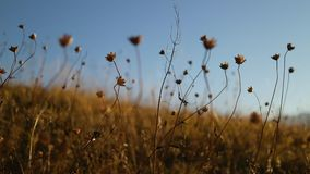 jesieni trawa w górach zbiory