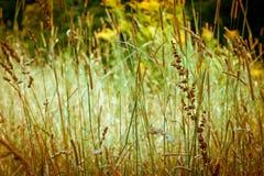 Jesieni trawy Zdjęcie Royalty Free