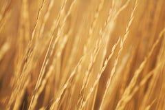 jesienią trawy Fotografia Stock