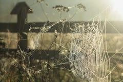 Jesieni trawy pole Wczesnego Poranku słońce Światło słoneczne Odbija w pajęczynie obrazy royalty free