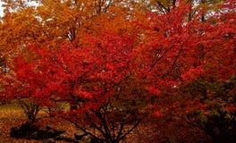 Jesieni uczucia Zdjęcie Stock