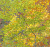 Jesieni uczucie Obraz Royalty Free