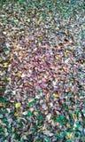 Jesieni ulistnienia żółtej zieleni kolorowy czerwony tło Zdjęcia Royalty Free