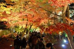 Jesieni ulistnienia iluminacja Zdjęcie Stock