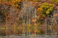 Jesieni ulistnienia odbicia Na Samogłów jeziorze Zdjęcie Stock