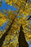 Jesieni ulistnienia oddolna perspektywa 01 Zdjęcie Royalty Free