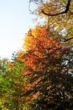 Jesieni ulistnienia paleta w parku zdjęcia royalty free