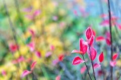 Jesieni ulistnienia pojęcie Czerwony i kolorowy liść gałąź zakończenie up Jesień liścia koloru zjawiska afektów normalnie zieleń fotografia stock