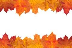 Jesieni ulistnienia tło Fotografia Stock