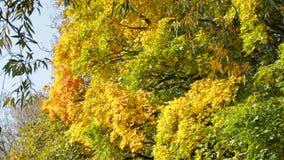 Jesieni ulistnienie zdjęcie wideo