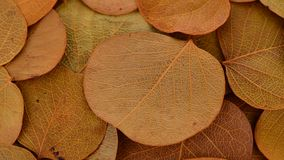 Jesieni ulistnienie