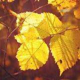 Jesieni ulistnienie Obrazy Royalty Free